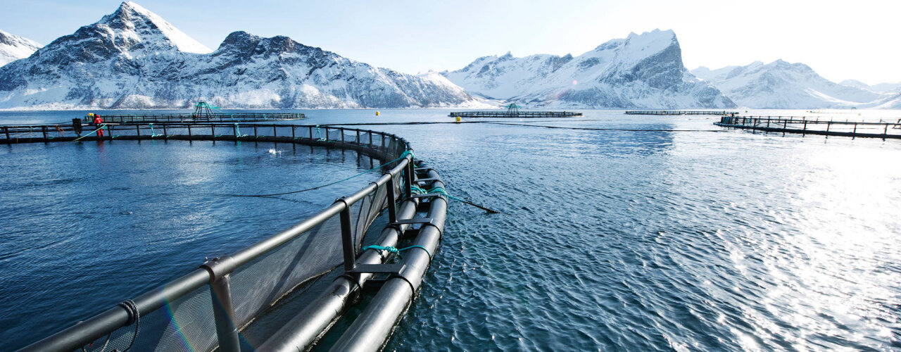 Fish farms surrounded by snowcapped mountains.