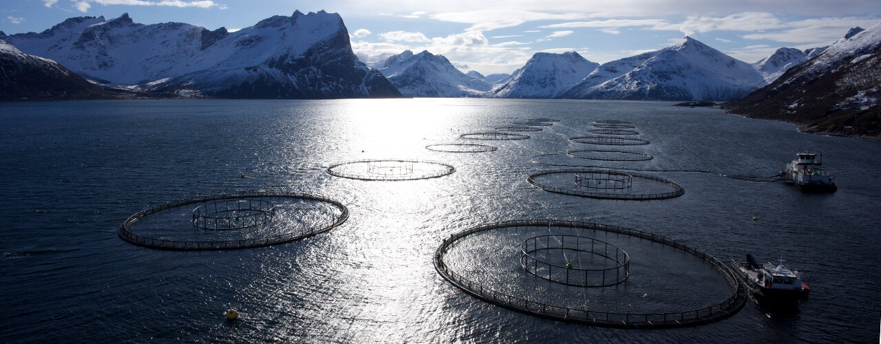 fishing cages in a fjord