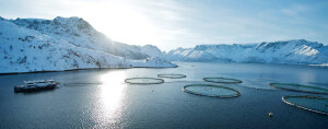 Fish farm in a norwegian fjord with snow covered mountains