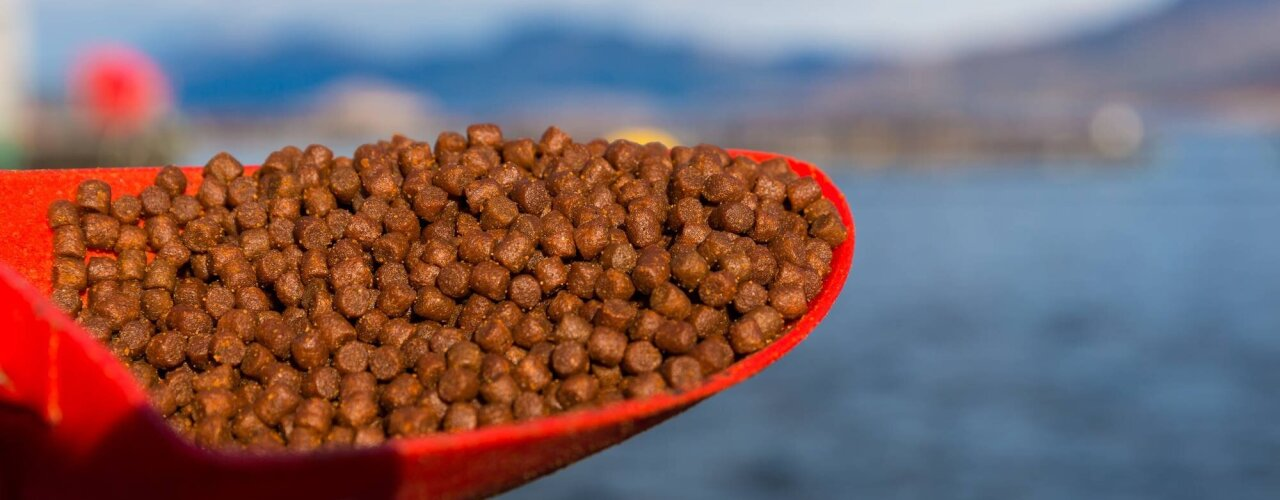 Pellets fish feed